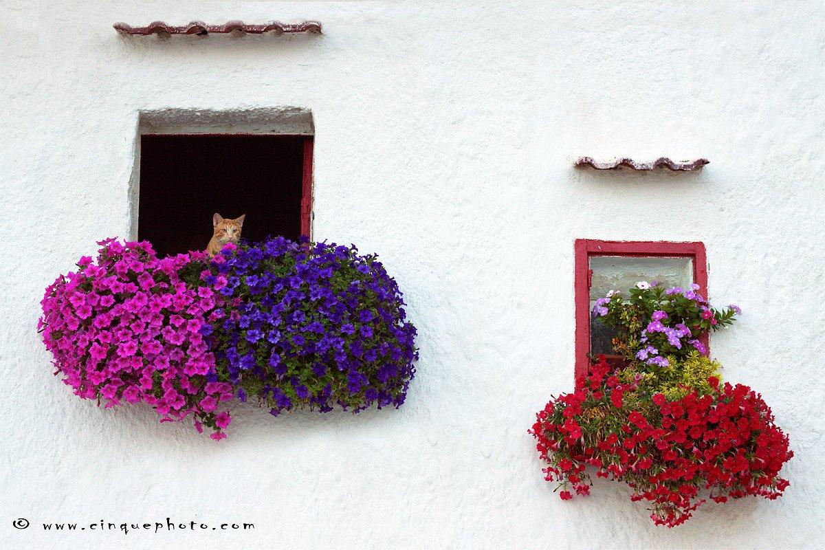 Un piccolo gatto curioso a Monopoli, Puglia