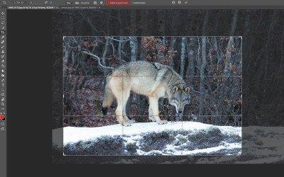 Lezioni di Photoshop per principianti