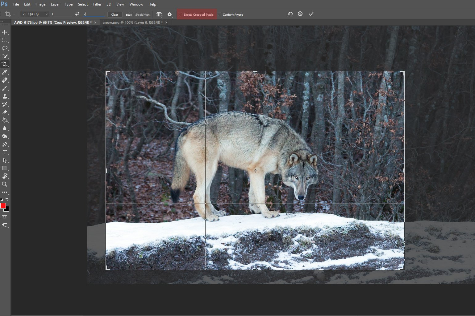 Ritagliare foto con Photoshop