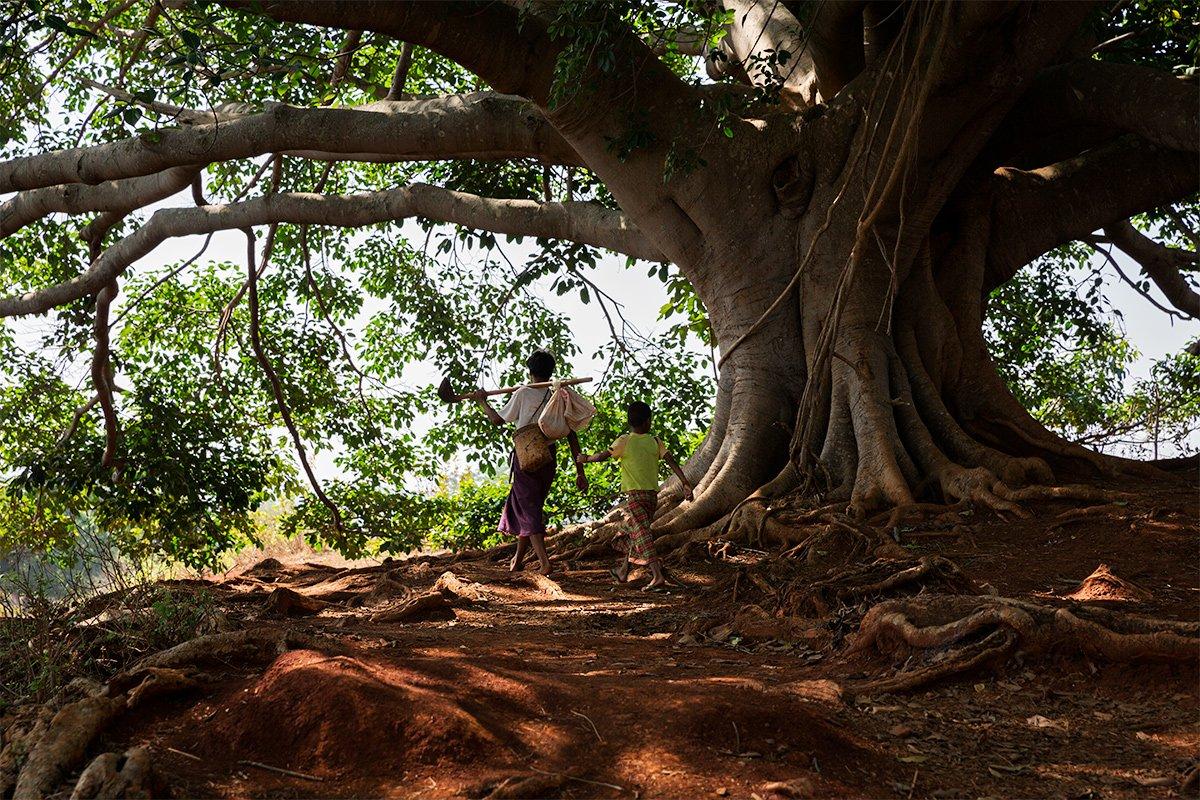 Un maestoso Buddha tree in Myanmar