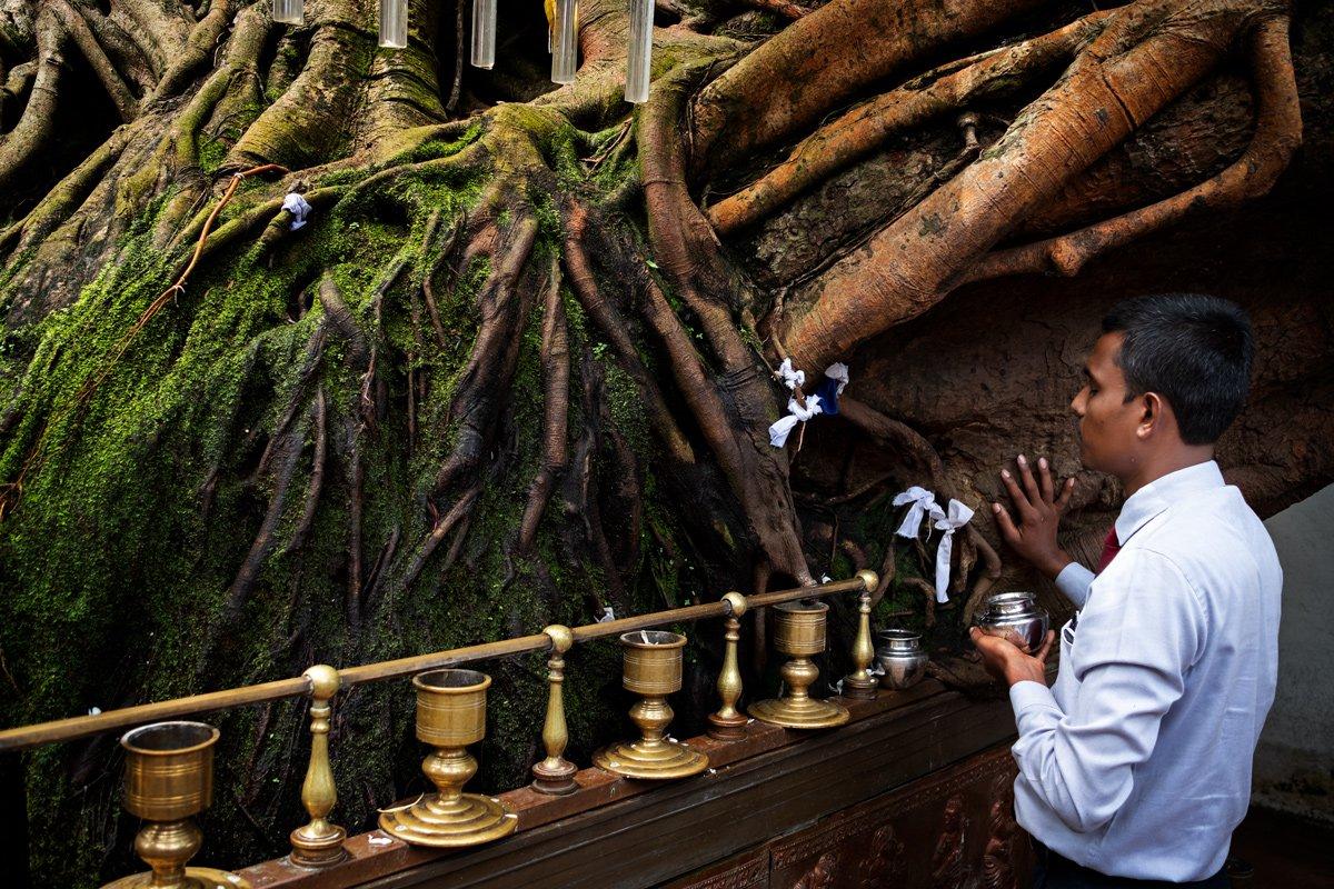 Temipo buddista Colombo, Sri Lanka